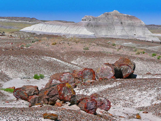Colorful petrified wood remains are scattered about the rolling hills of the Crystal Forest
